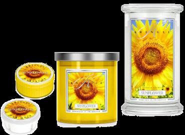 Sunflower von Kringle Candle - ist in der Schweiz erhältlich bei Creativa 1001 Geschenkideen in Aarau